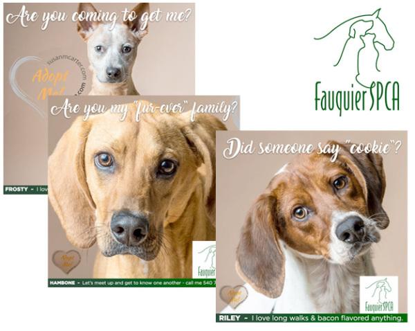 Fauquier SPCA