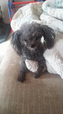 Missing dog