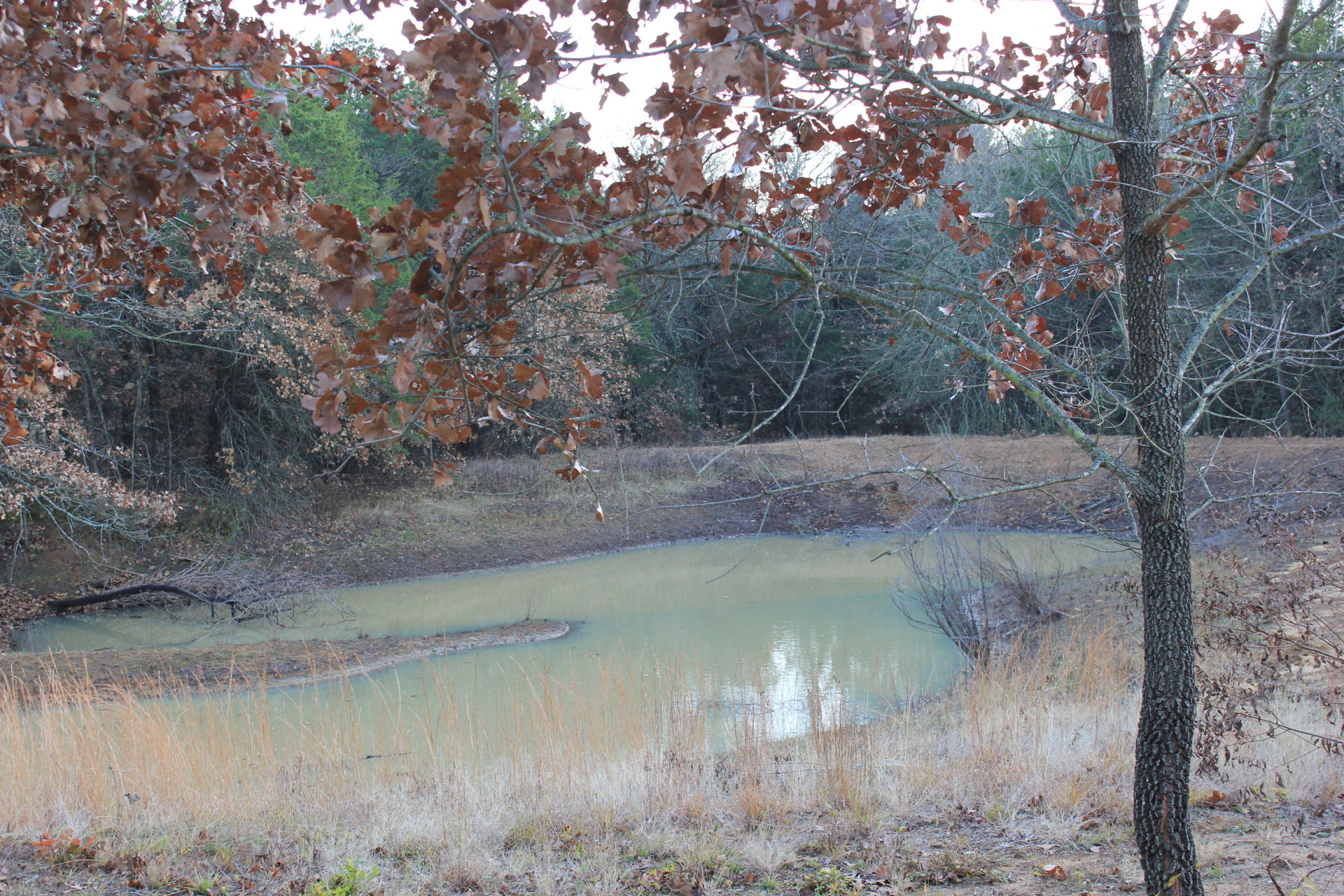 Pond #3