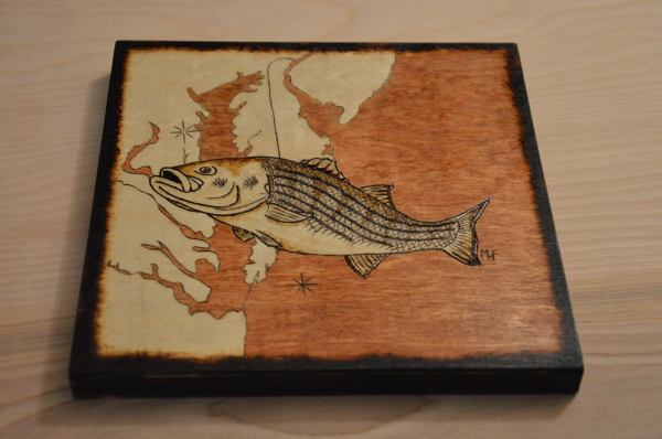 MidAtlantic Striped Bass