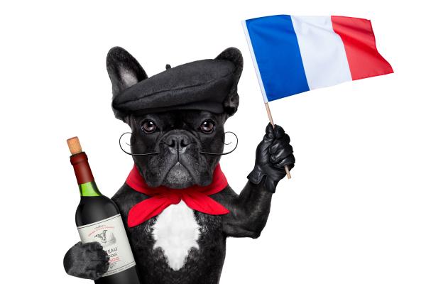 French dog wine tasting