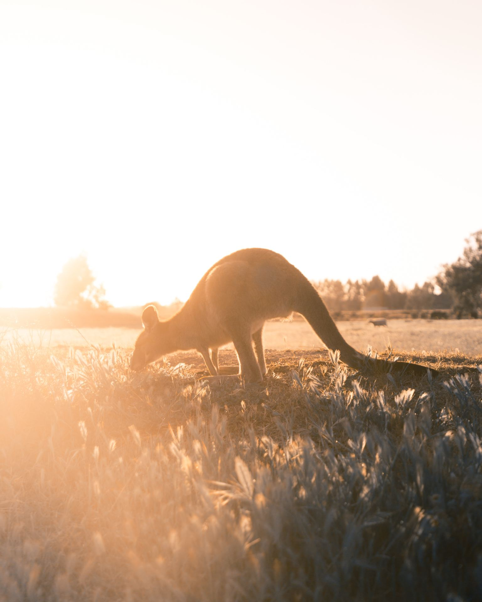 10 Kangaroo Facts That You Never Knew You Needed