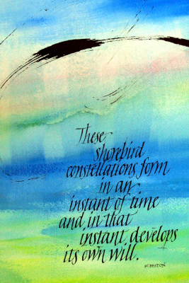 JoAnn B. Brand     Title: Shorebird Constellations     Price: Not for Sale   Size: 18 x 24  	Medium: Watercolor and Sumi Ink.