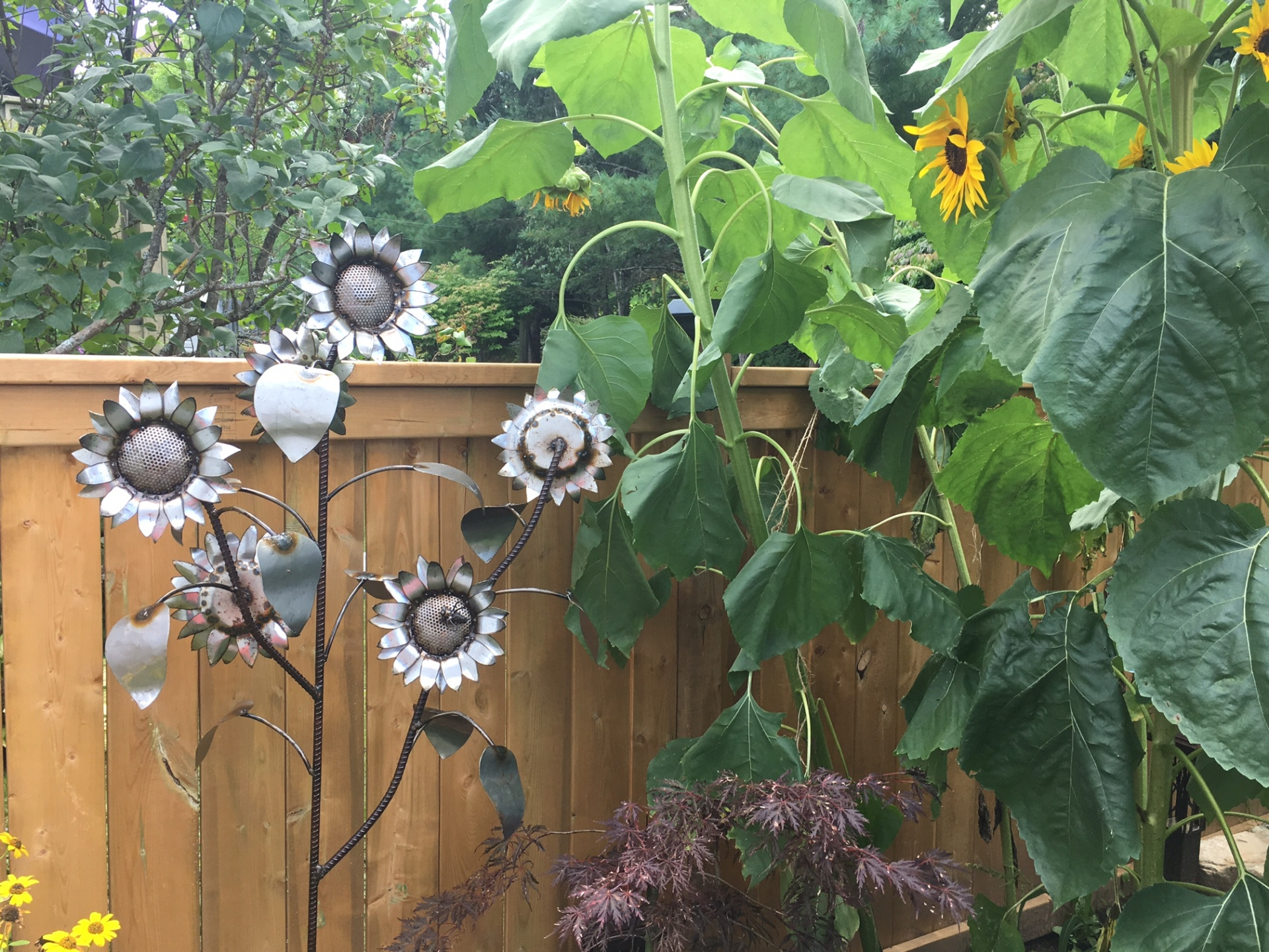Multi-headed Sunflower