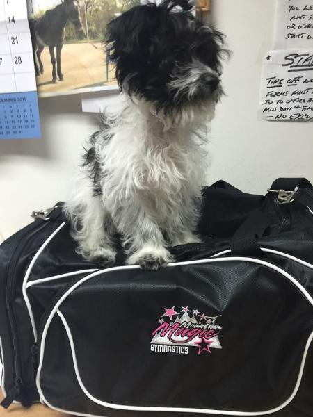 Molson - AKA Gym Dog