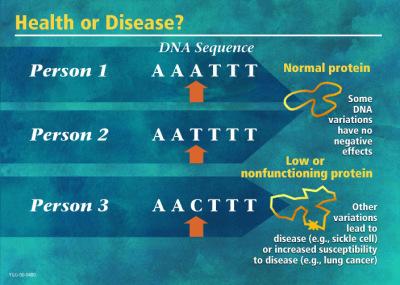 genetic variations/ mutations causing cardiovascular, neurological and hormonal imbalances