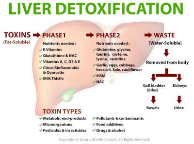 hepatic detoxification