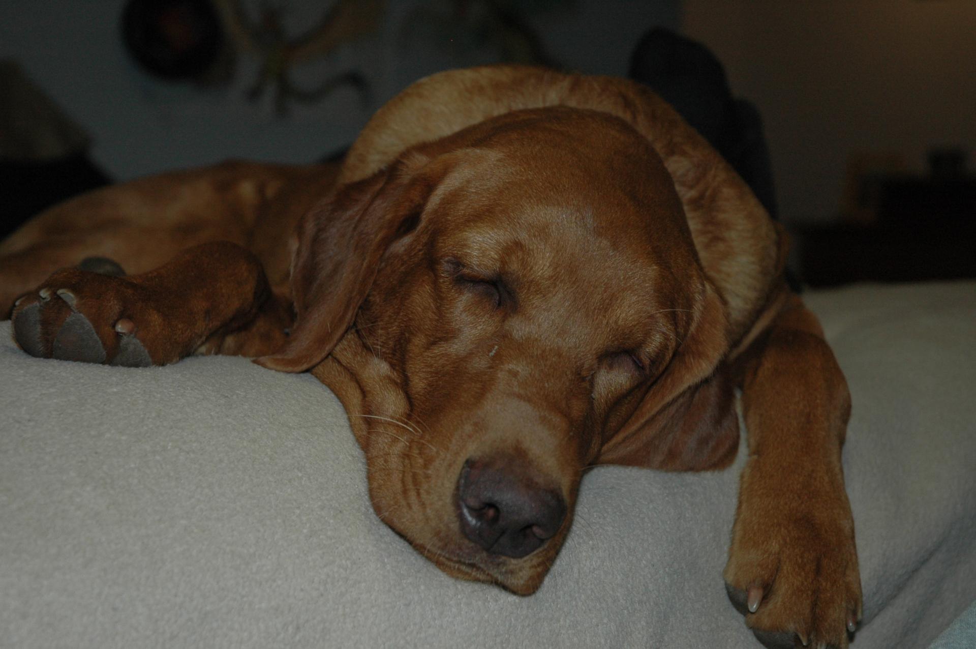 Sleepy Tango all cozy on the bed