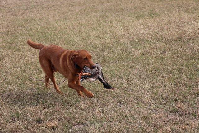 Training in Texas 2015 (Picture taken by Lauren Springer)