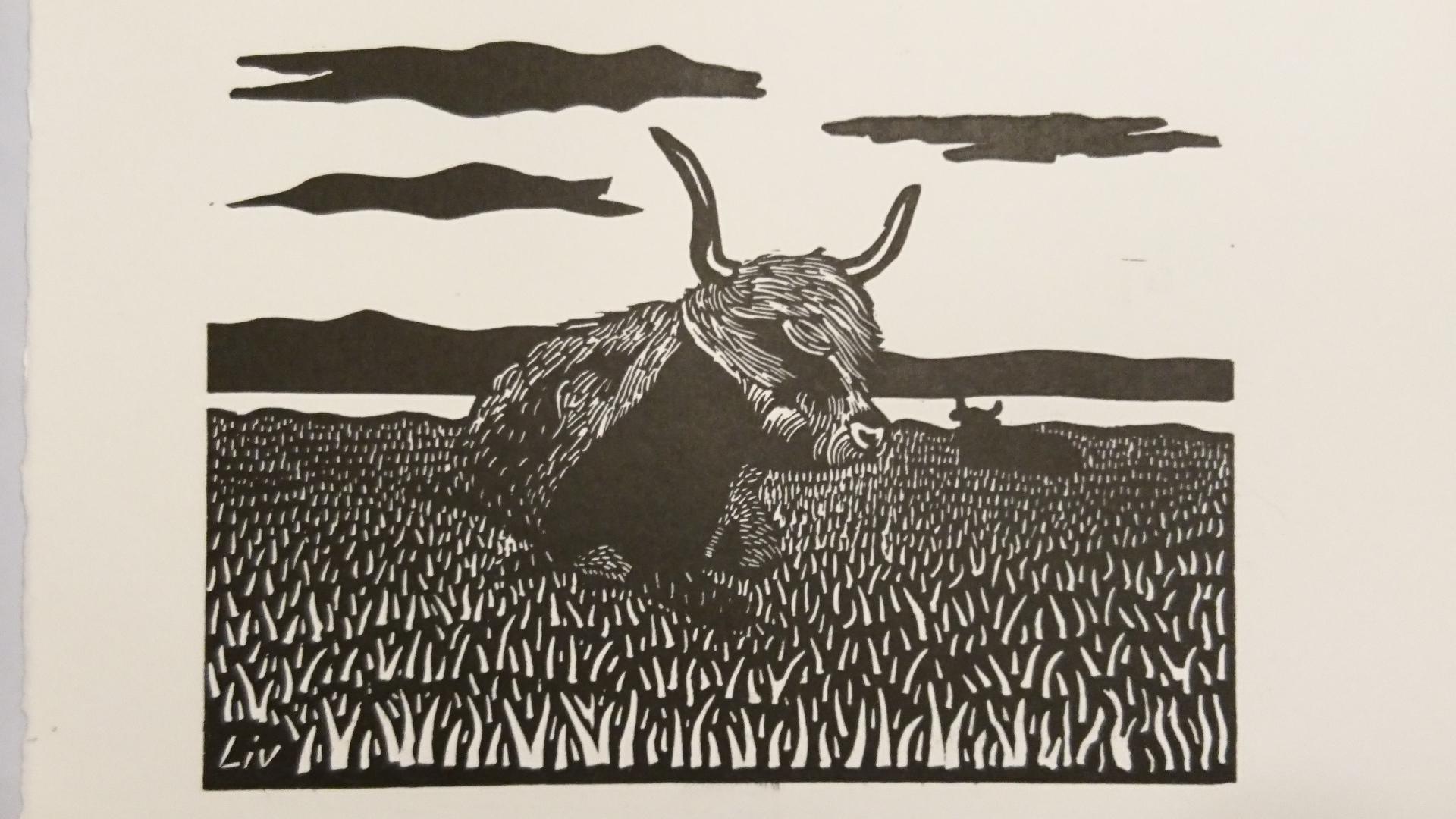 Highlander Cow