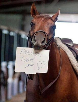 Promoting saving off the Track thoroughbreds