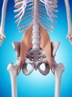 Hidden Survival Muscle Psoas Hip Muscle