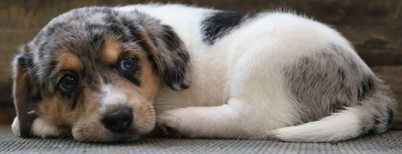 near memphis tn adoptable pets