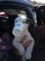 pet adotion hernando, ms