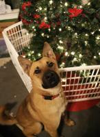 adopt a resuce dog