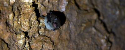 Monitorização de Morcegos