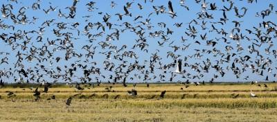 Fotografia - Libélulas, libelinhas e aves aquáticas do Estuário do Tejo