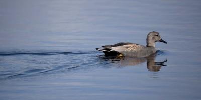 Fotografia de aves no Espaço Interpretativo da Lagoa Pequena