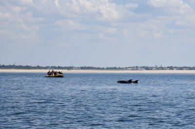 Passeio de barco no Sado com a WIND