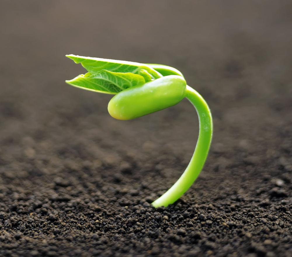 Agroecología y Economía Solidaria