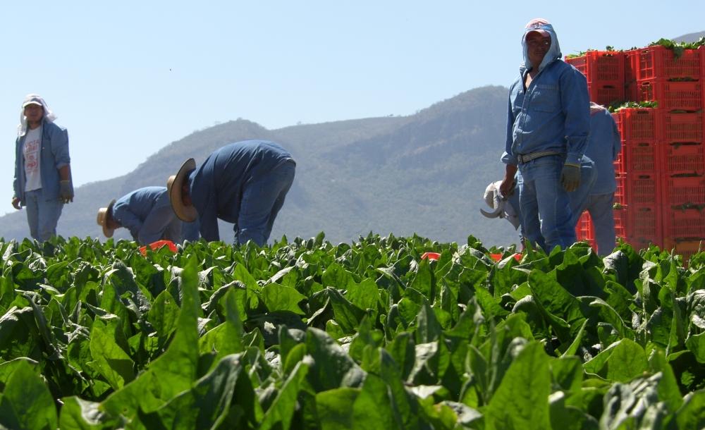 Empresa recuperada se convierte en Cooperativa productora de Alimentos