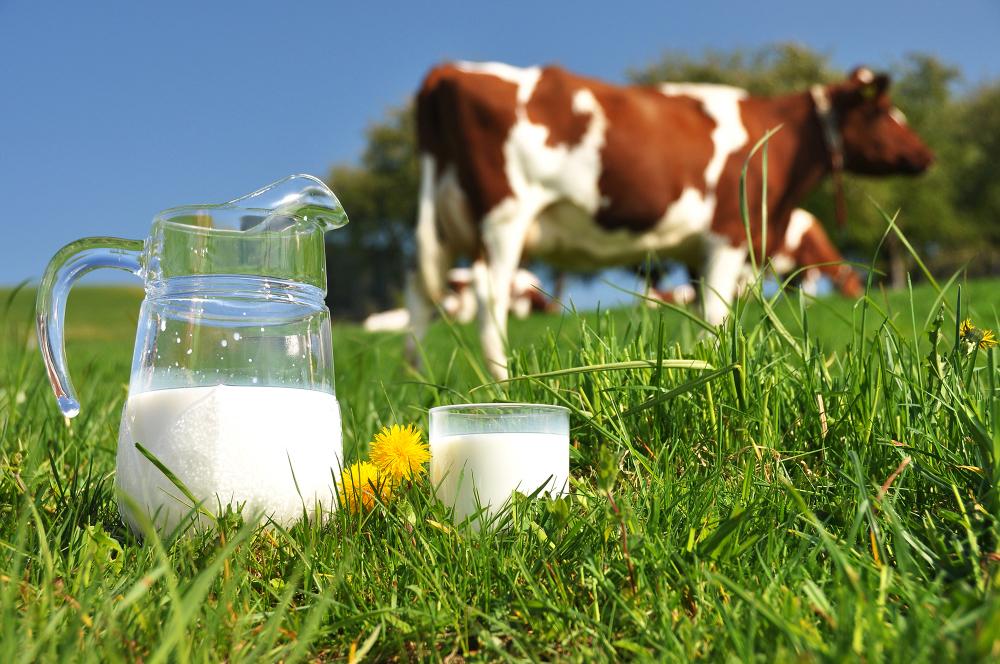 Cooperativas gallegas se unen para crear un grupo lácteo nacional