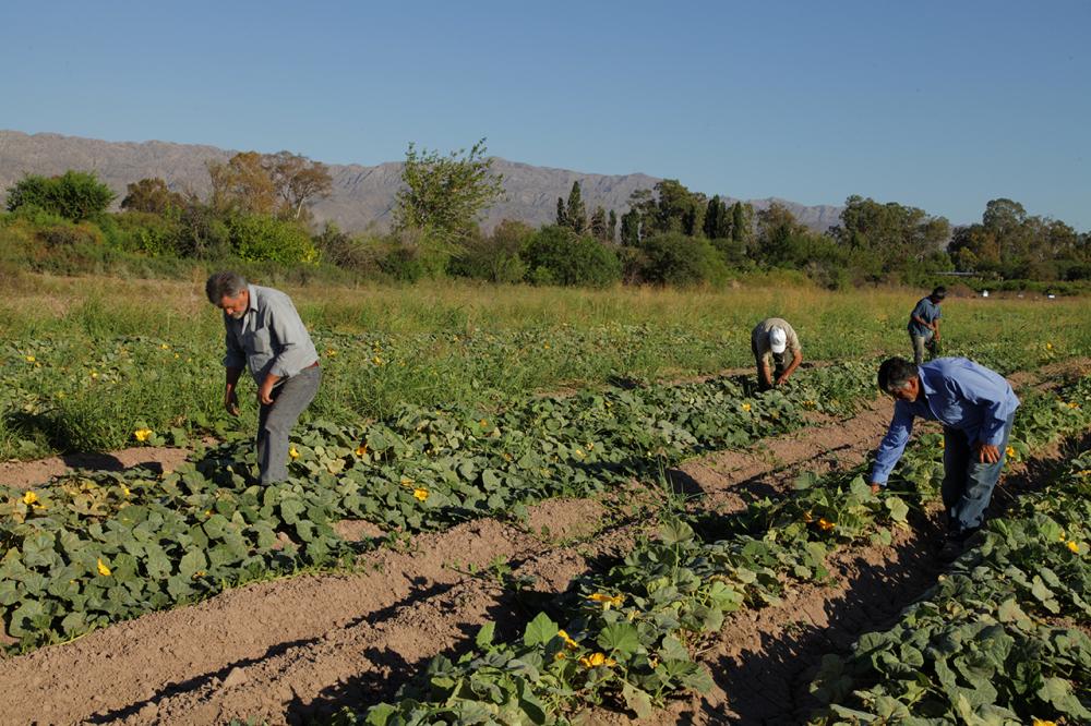 Las cooperativas agropecuarias argentinas tienen un nuevo presidente