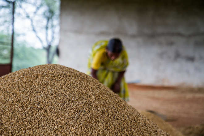 Agricultores Indios logran cosechas records sin usar transgénicos