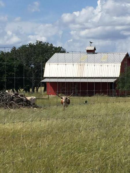 Longhorns!