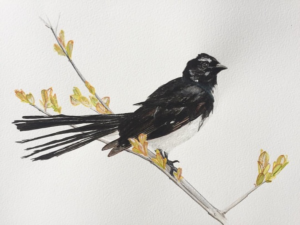 WILLIE WAGTAIL (SOLD)