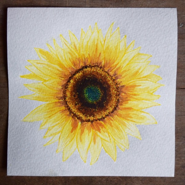 SUE'S SUNFLOWER