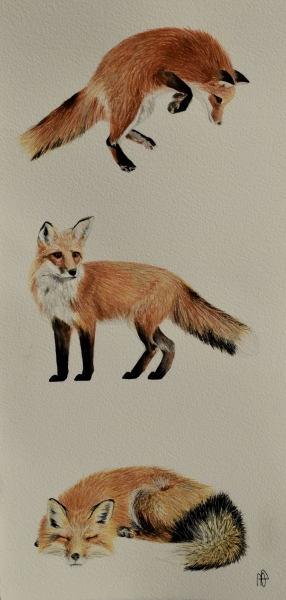 FOXY LADY (SOLD)