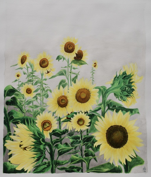 SUNFACES (SOLD)