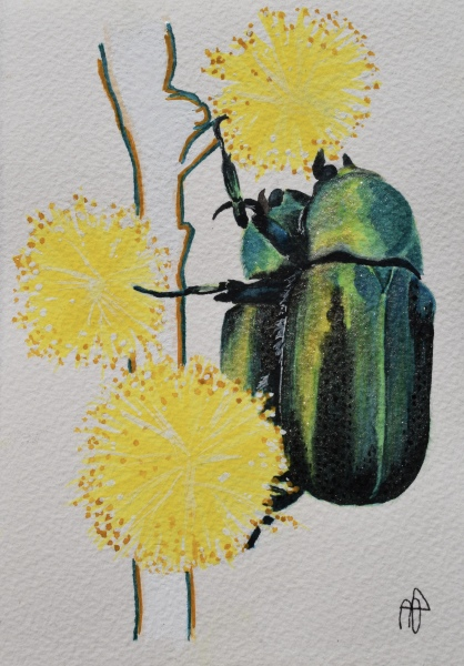 BEETLE PACK (SOLD)