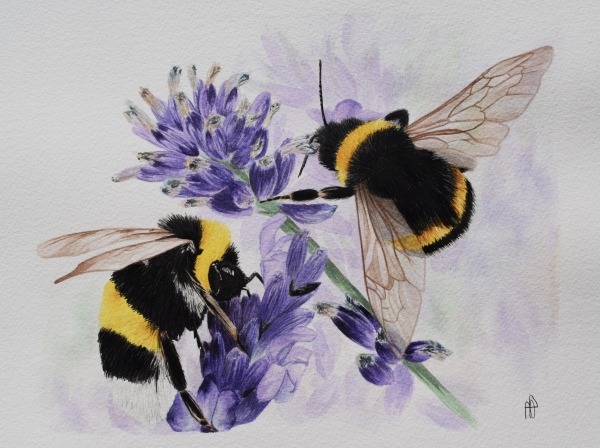 BUMBLING ON (SOLD)
