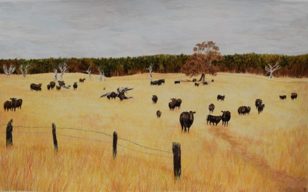 MORTLAKE MOOING (SOLD)