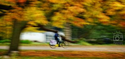 autumn at the Vondelpark
