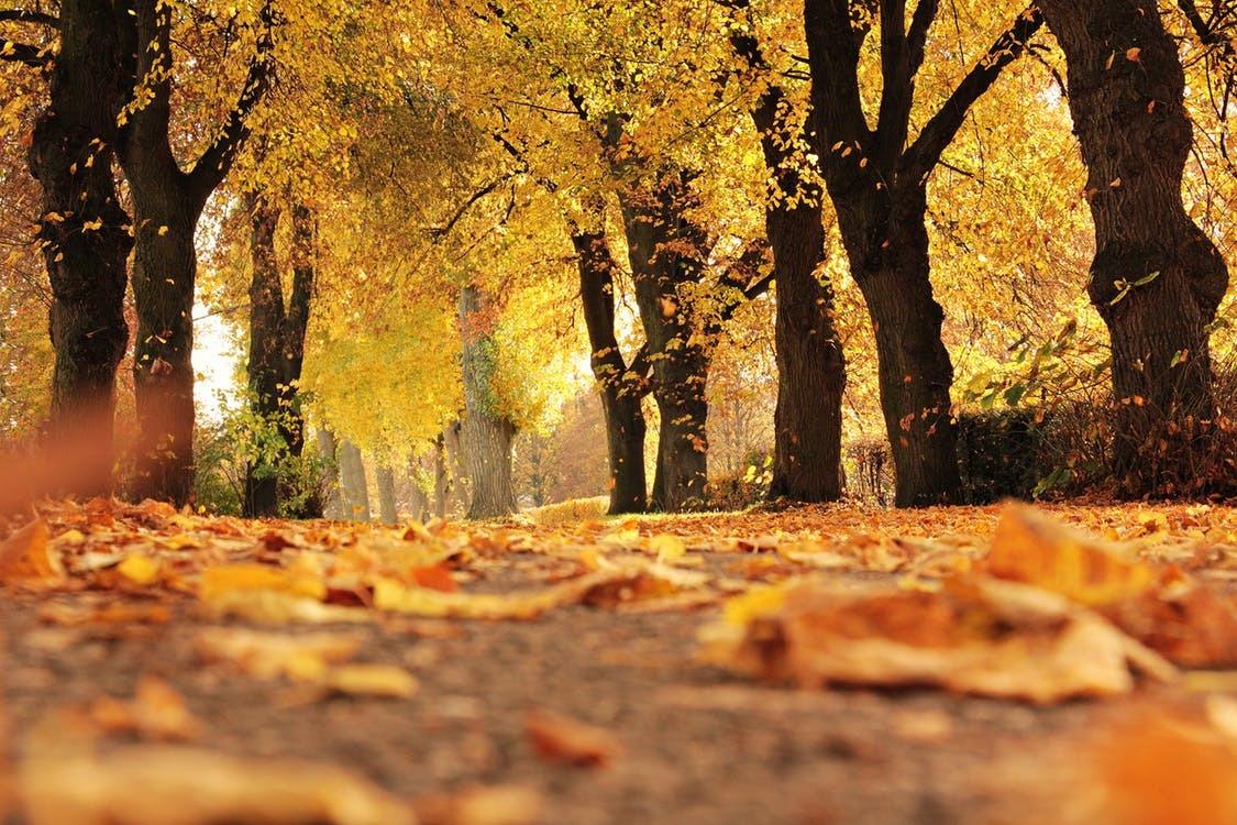 Cómo el otoño nos enseña sobre  el desapego  (Podcast)