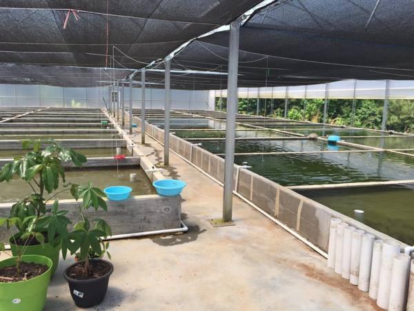 Inside of the goldfish farm