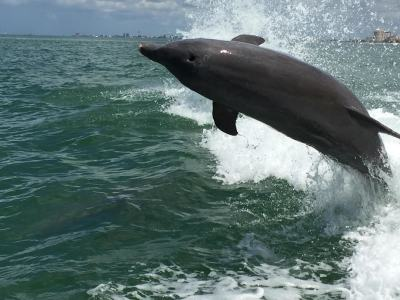 Dolphin/ Wildlife