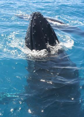 Marine Mammal Detection and Mitigation (MMDM)