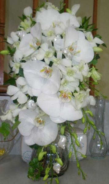 Phalaenopsis orchid seashell Cascade