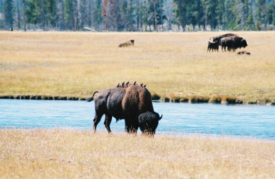 Yellowstone Adventure 2016