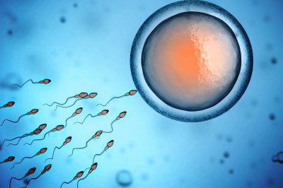 sperm and egg donor