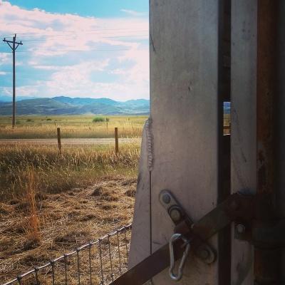 6 Dreams - The ANIROONZ Sheep Company Story pt 2