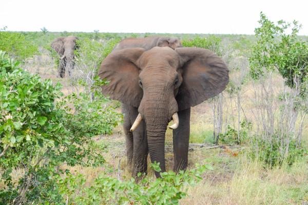 elephant, love, travel, safari, africa