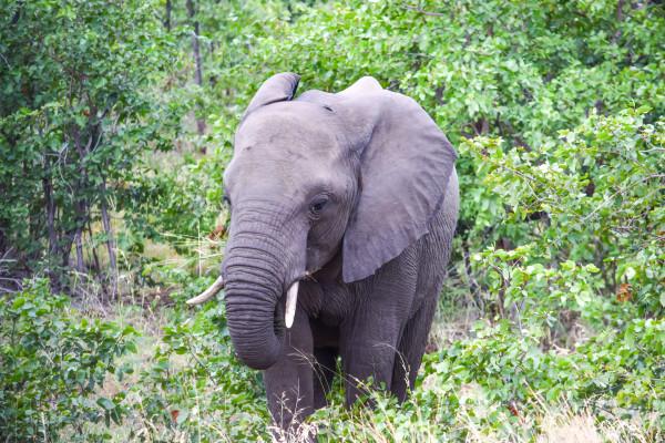elephants, travel, africa, safari