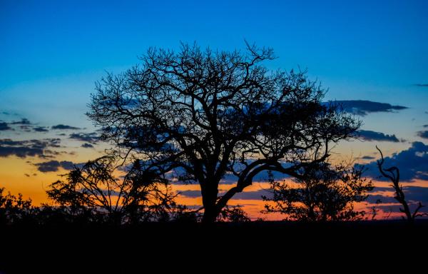 tree, sunset, africa