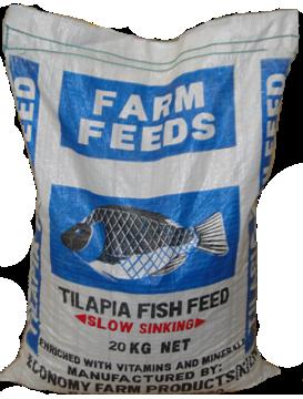 Tilapia Fish Fillets
