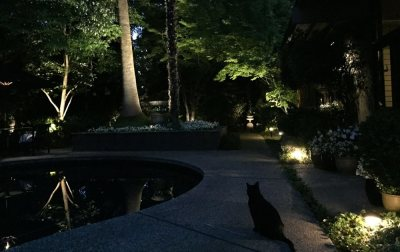 Path Lights and Uplighting Provide Safety, Security, Value, and Fun